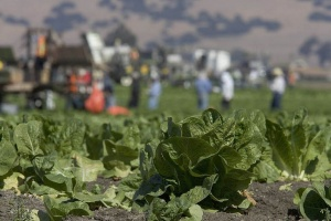 Vaccine Hesitant US Researchers are Engineering Lettuce and Spinach to Carry mRNA COVID Jabs
